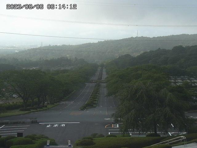 桜並木カメラ